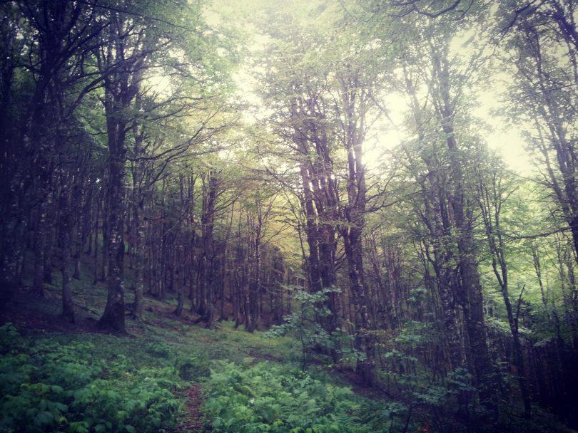 Zelengora | Via Dinarica White Trail | Beautifully WILD Bosnia and Herzegovina