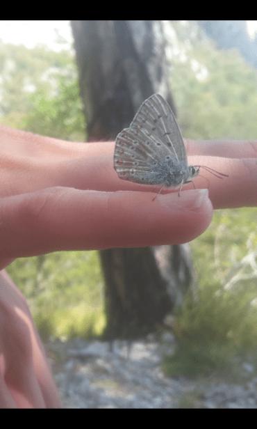Birthday_Butterfly