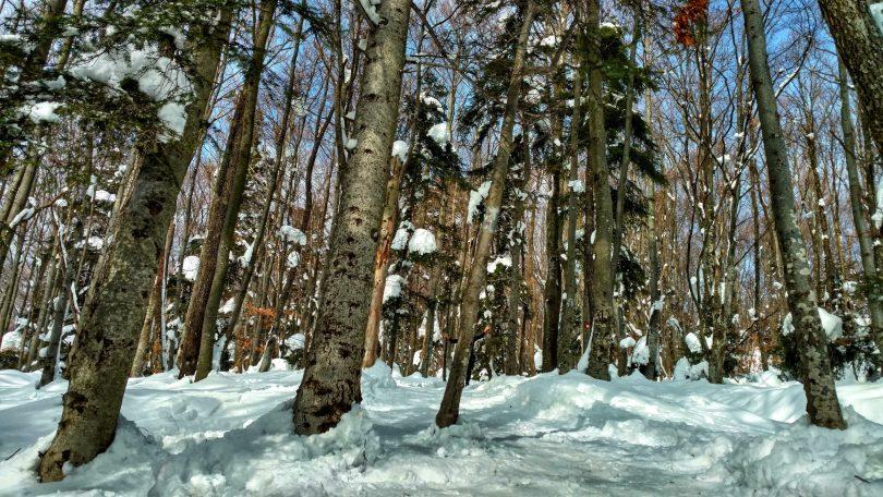 White Medvednica Walk   Looking back on February