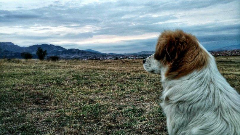 Bela the boulderdog