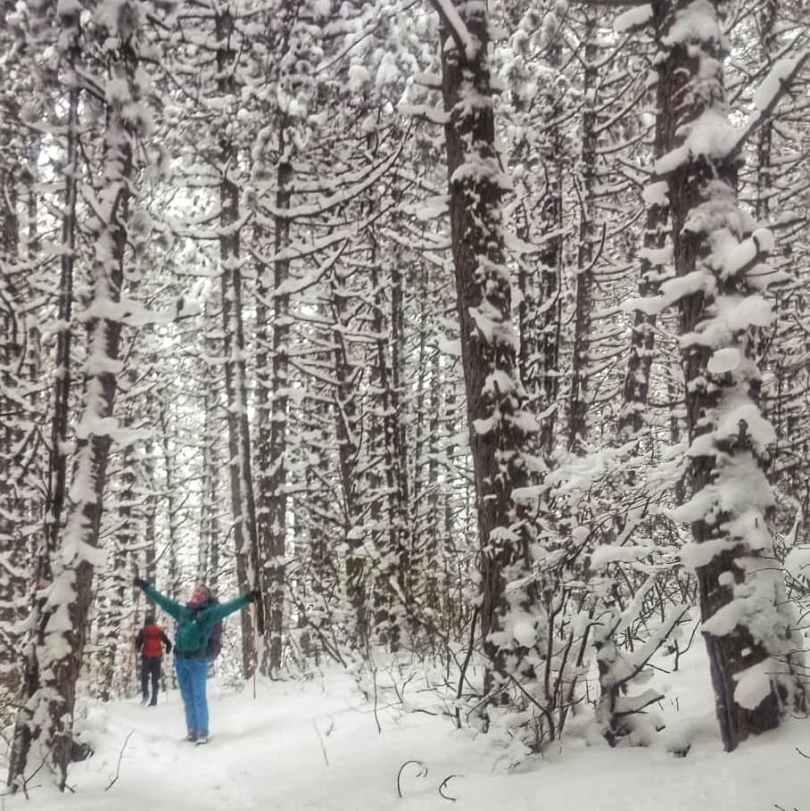 Trebević forest in winter