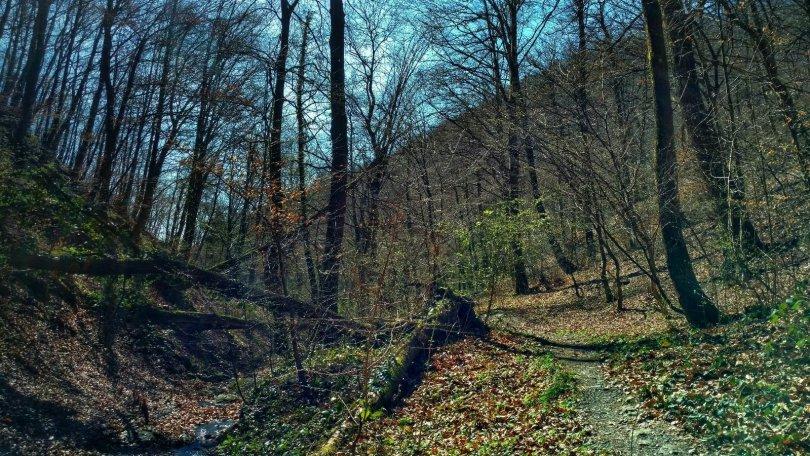 Hiking Medvednica: Medvedgrad