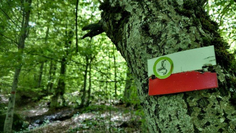 Hiking in Mavrovo National Park to Sandaktash mountain