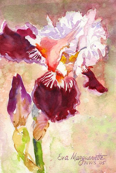 Bluebeard Iris by Eva Margueriette