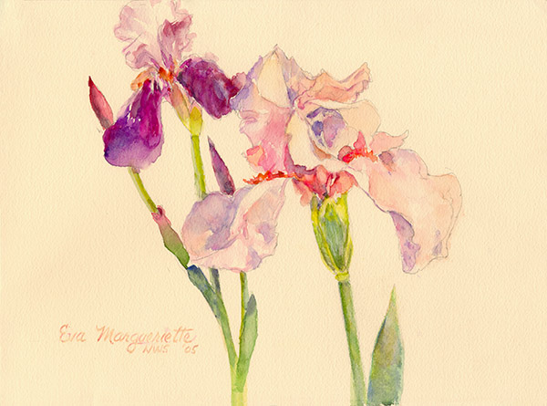 iris-garden