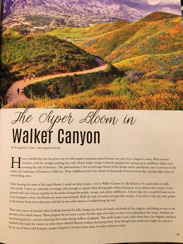Super Bloom in Walker Canyon
