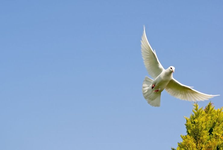 The dovelike Holy Spirit