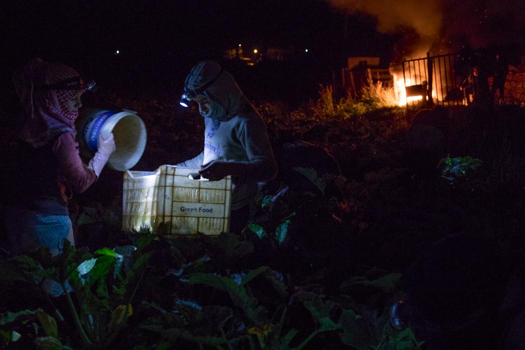 Jornaleras trabajando en plena noche en la recogida de calabacines, a temperaturas muy bajas.