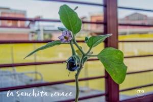 La Sanchita renace en EVArganzuela