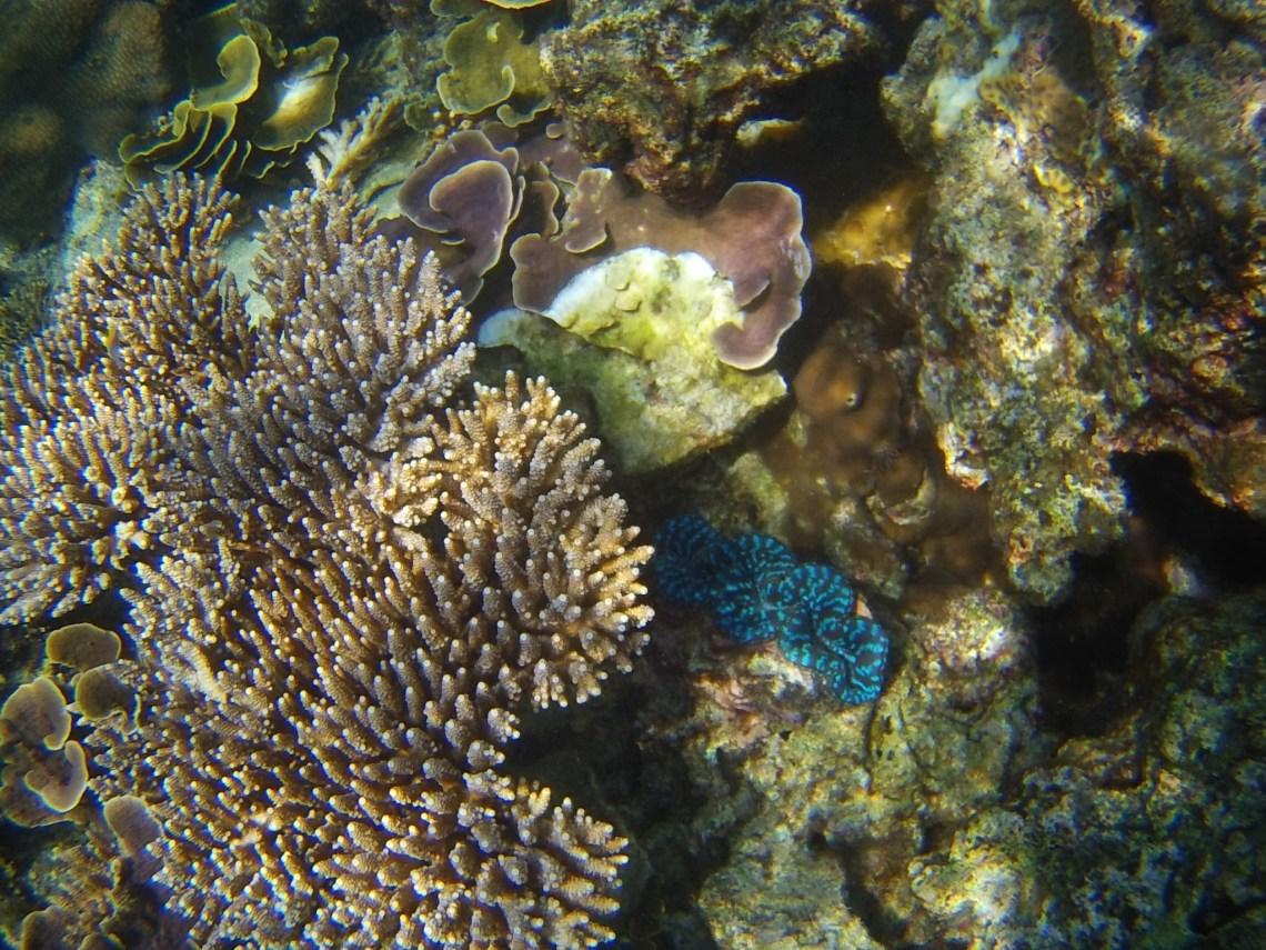 Snorkeling perhentian