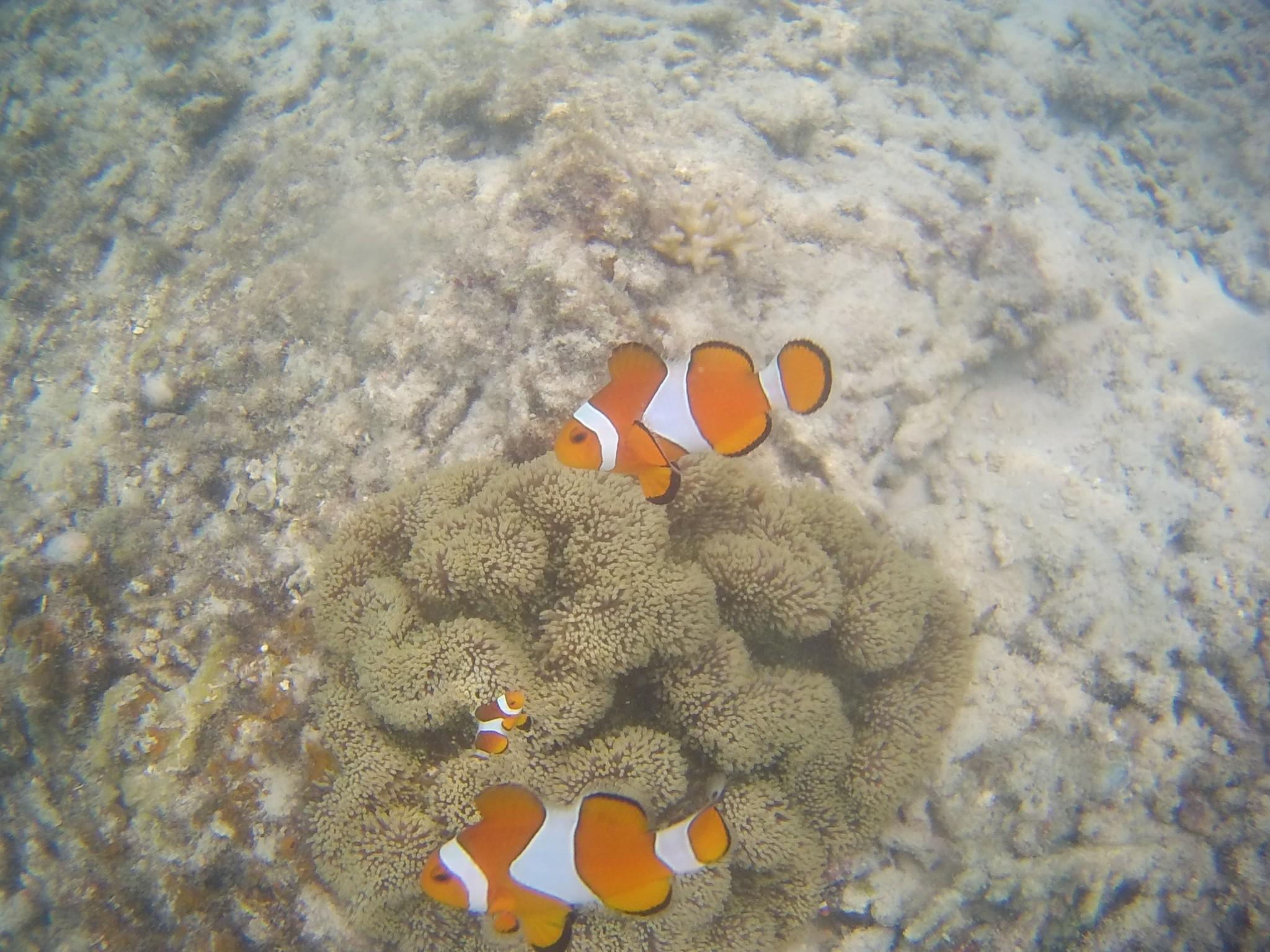 Snorkelling perhentian