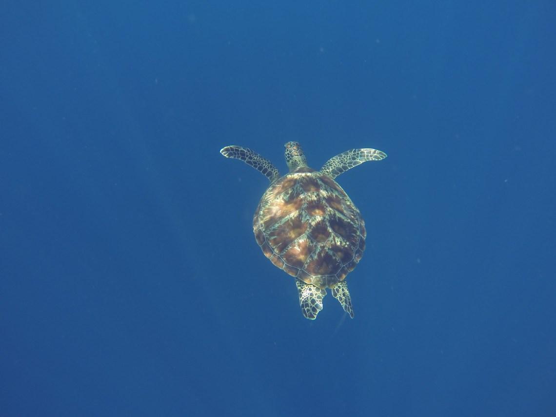 Snorkeling Gili