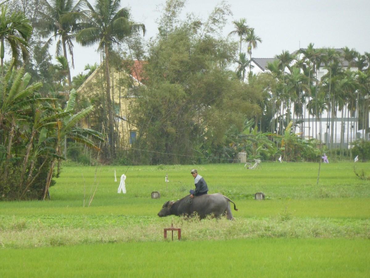 Découvrir la vie locale – Hoi An Eco Tourism