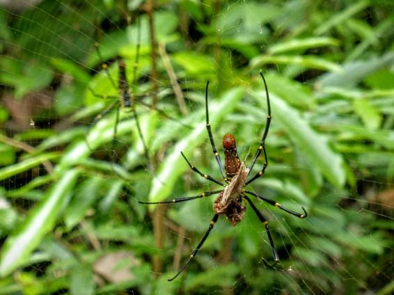 taman negara araignee