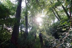 écotourisme en Alsace