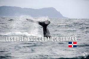 Baleines Samana