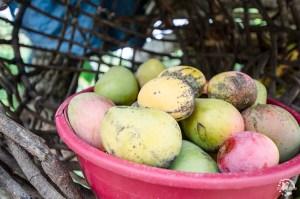 Mangue République Dominicaine