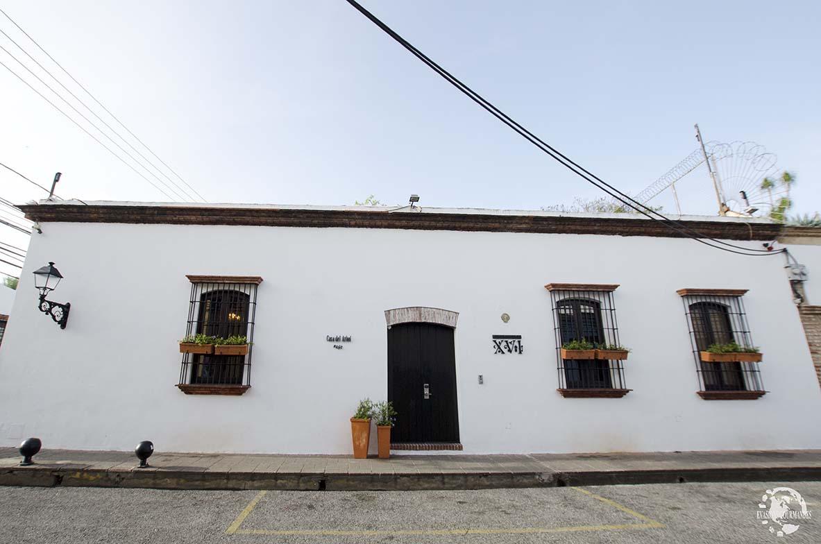 Casas del XVI, Casa del Arbol