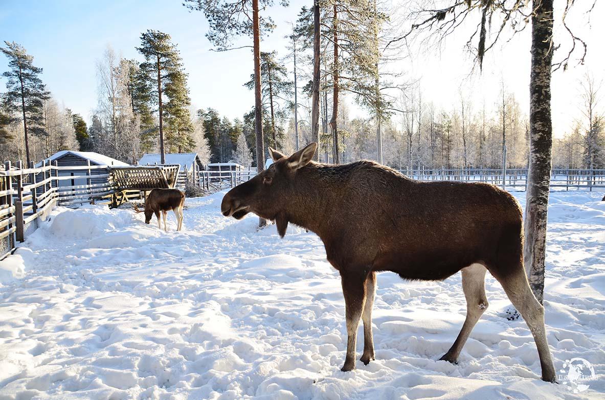 arctic wild ice dormir dans un igloo ranua en laponie finlandaise. Black Bedroom Furniture Sets. Home Design Ideas