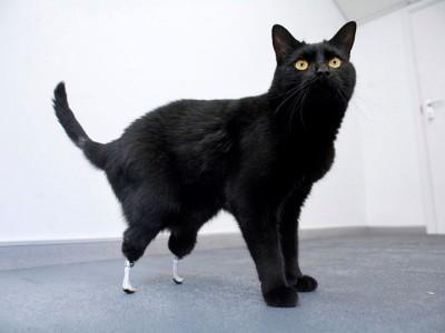 11_Futur - Les animaux handicapés retrouveront leur joie de vivre grâce à des prothèses conçues sur mesure..?!