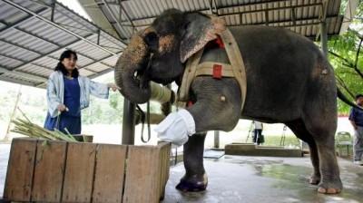 18_Futur - Les animaux handicapés retrouveront leur joie de vivre grâce à des prothèses conçues sur mesure..?!