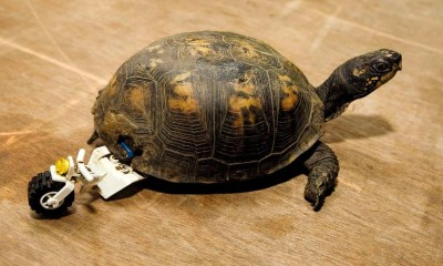 19_Futur - Les animaux handicapés retrouveront leur joie de vivre grâce à des prothèses conçues sur mesure..?!