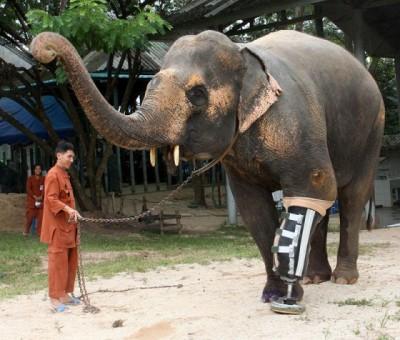 2_Futur - Les animaux handicapés retrouveront leur joie de vivre grâce à des prothèses conçues sur mesure..?!