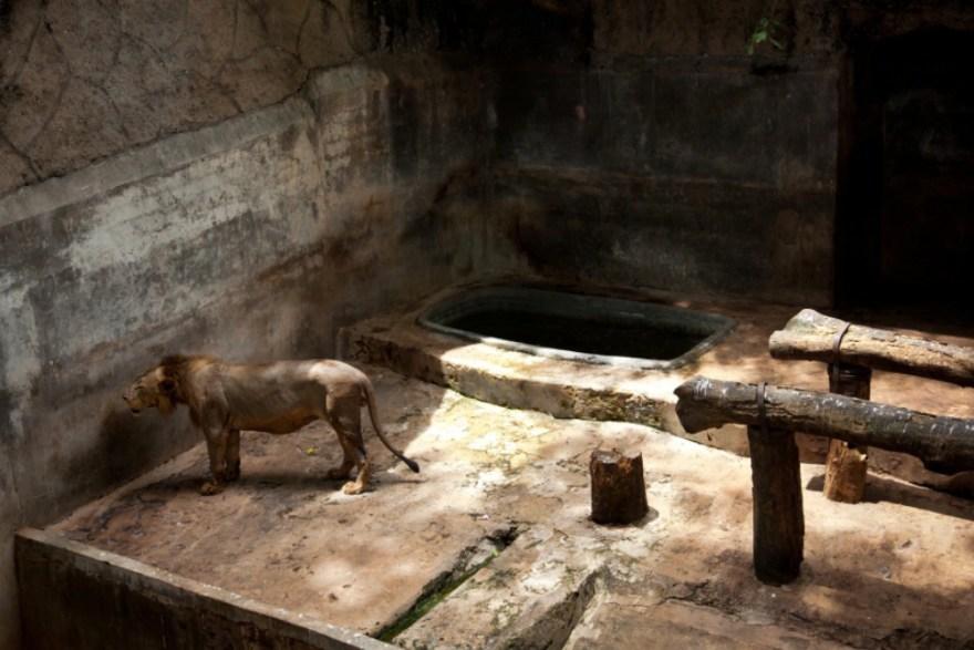 12_Animal - La souffrance des animaux de zoo capturée à travers le monde