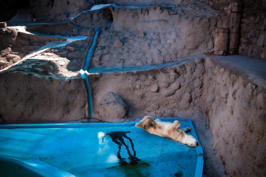 2_Animal - La souffrance des animaux de zoo capturée à travers le monde