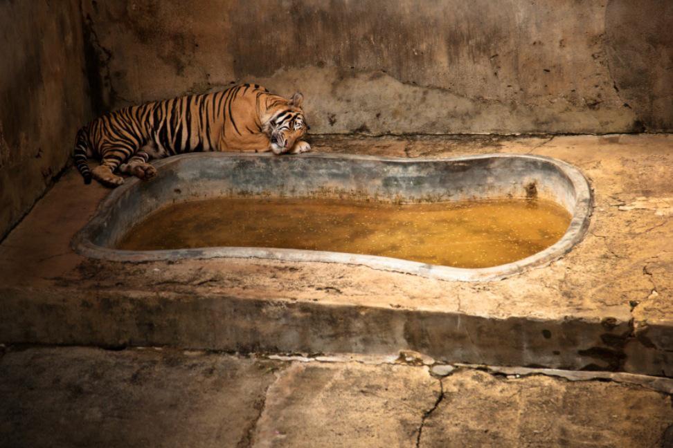 6_Animal - La souffrance des animaux de zoo capturée à travers le monde