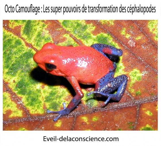 3_Octo Camouflage – les super-pouvoirs de transformation des céphalopodes