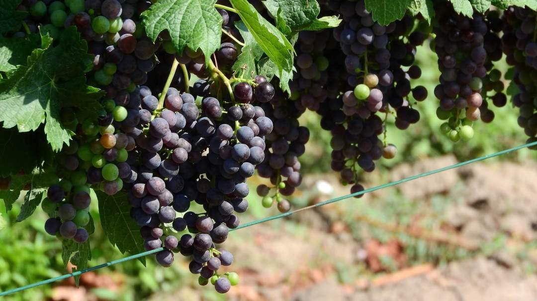 Winery matkaunelmaa