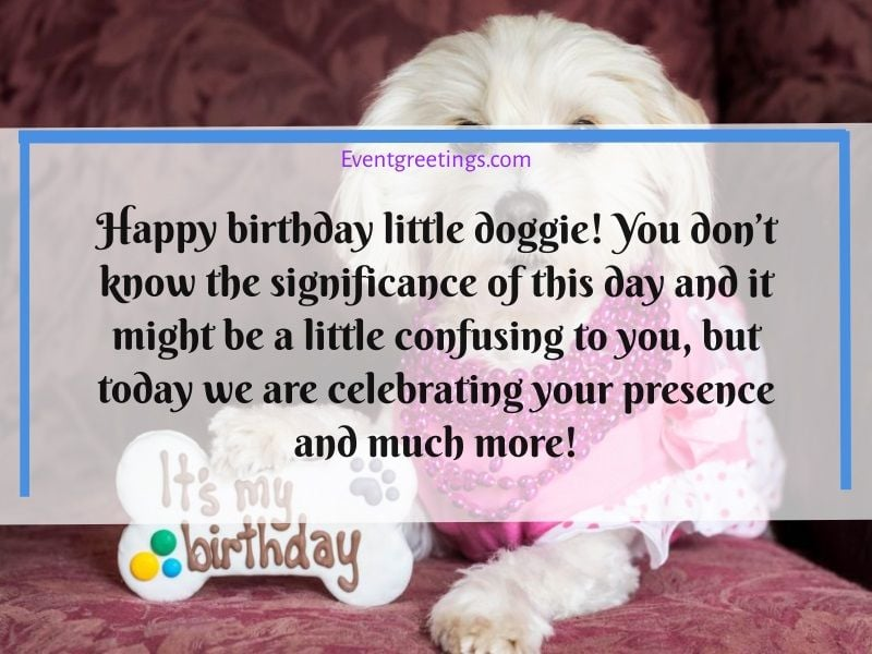 50 Best Happy Birthday Dog Wishes With Images Events Greetings