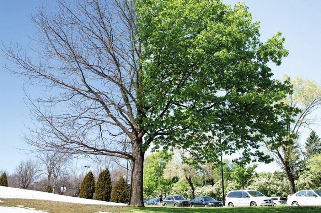 architettura degli alberi convegno millet