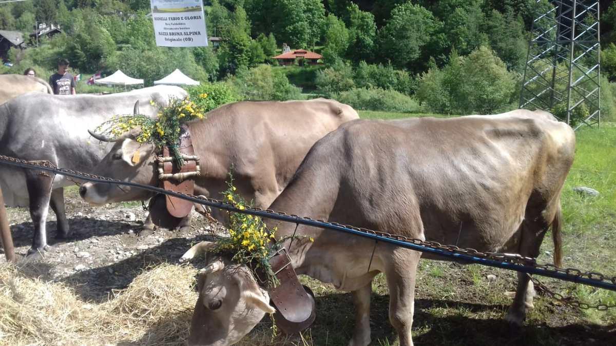 Riva Valdobbia: fiera delle Pietre Gemelle