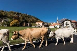 Crodo - transumanza - Valle Antigorio - ph. Marco Cerini