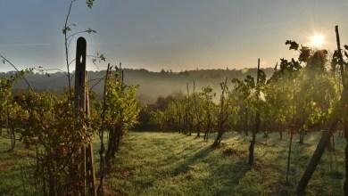 """Photo of Sizzano: """"Stuzzicando tra le vigne"""""""