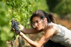 vino_sostantivo_femminile_2