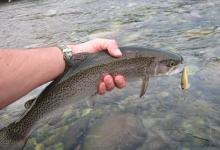 Photo of Pesca in Valsesia: Aperta la stagione 2021