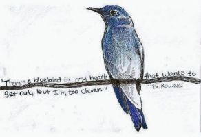 uccello-azzurro-1