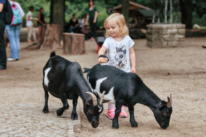 Berlin,Zoo,Tiere, Abenteuer,Streichelzoo