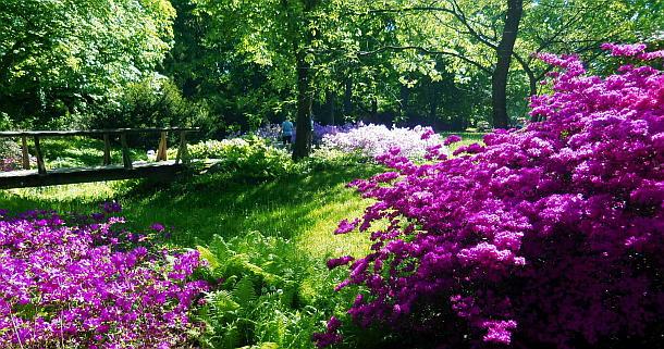 Zauberblüten,Britzer Garten,Berlin