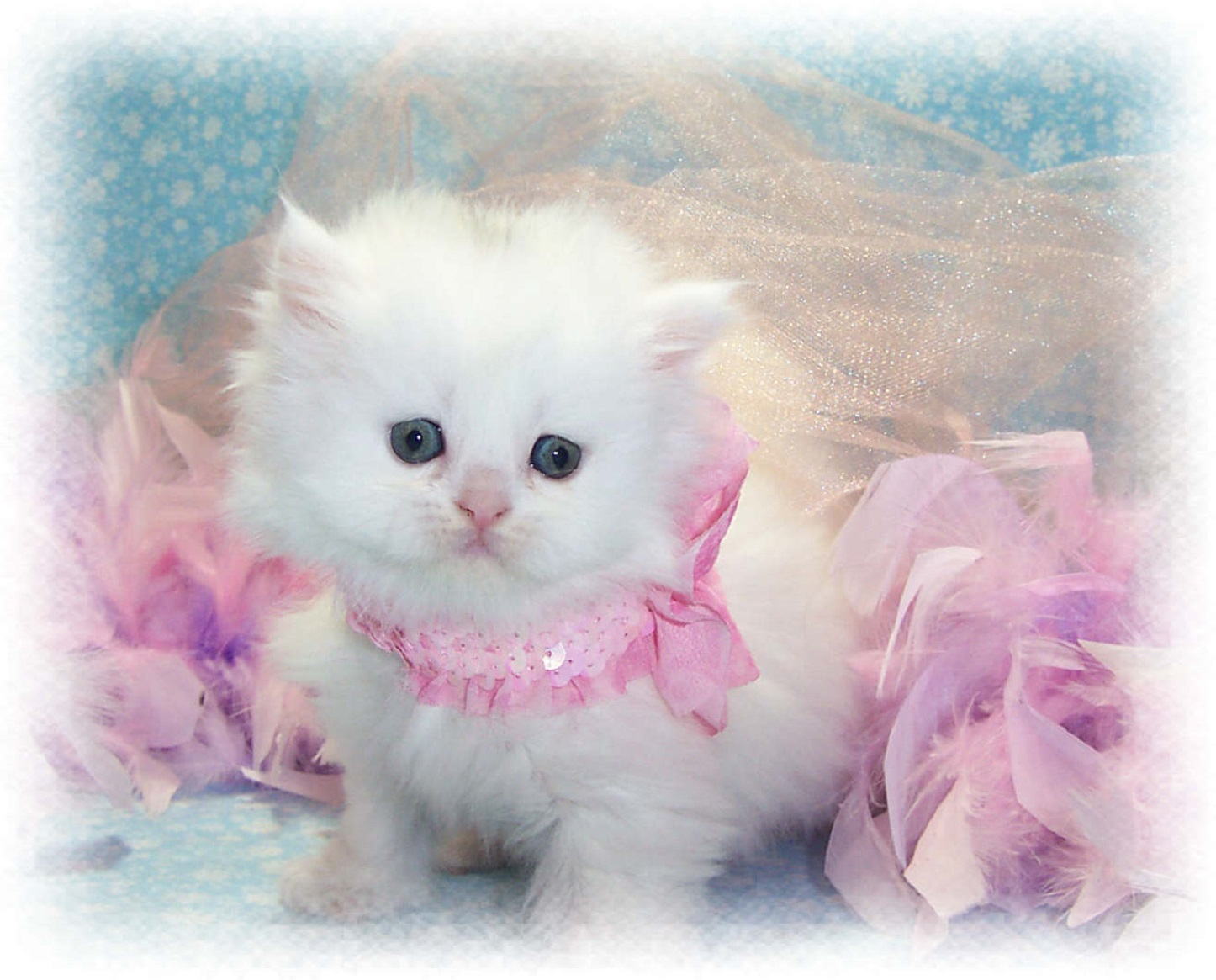 Beautiful Kittens Cute Cat Images Wallpapers Free Download