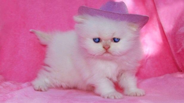 Beautiful kittens cute cat images wallpapers free download - Cute kitten wallpaper free download ...