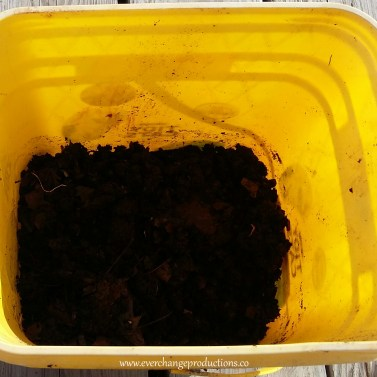 DIY Build Your Own Vermicomposting Factory Step 4