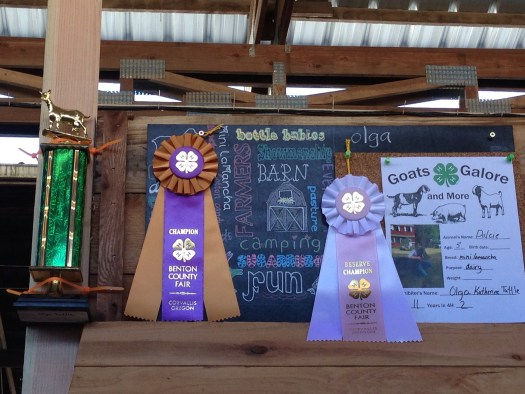 Olga and Dulcie's ribbons and Reserve Champion Showman trophy.