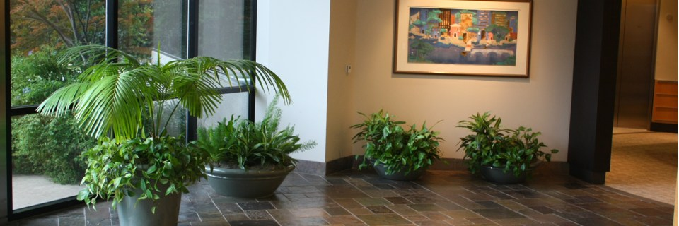We provide you with different varieties of indoor plants