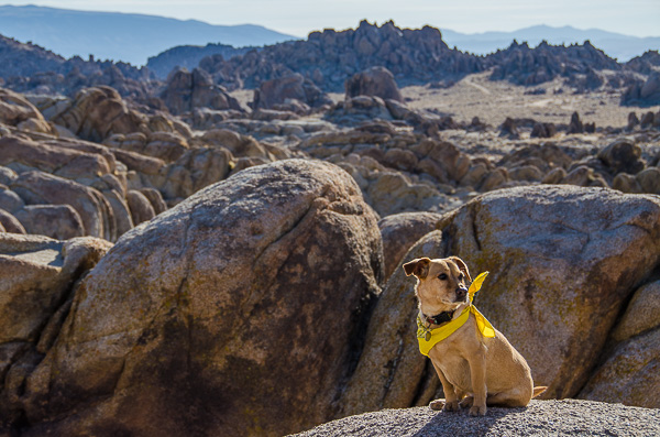 Posey in the Alabama Hills, California