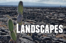 Guide to Galapagos Landscapes