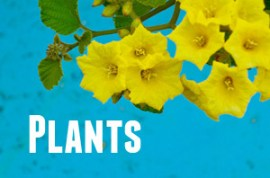 Guide to Galapagos Plants